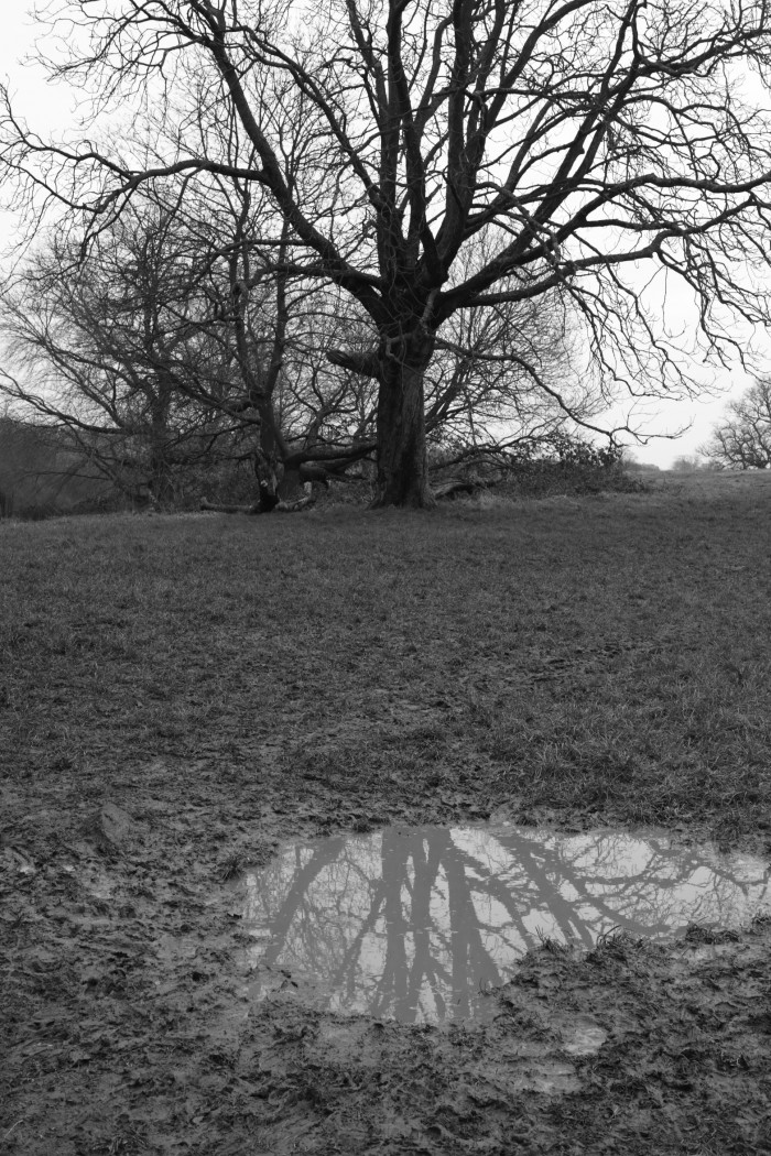 木と水たまり