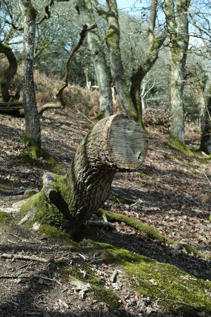 おもろい木